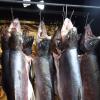 【イワナ】魚の燻製の作り方をちゃんと布教したい俺がいる【スモーカー】