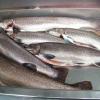 【ヤマメ&イワナ】管理釣り場『リヴァスポット早戸』を完全攻略してみた【燻製作り】